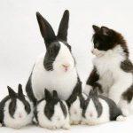 Não venda gato por lebre