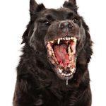 Como evitar que um cão bravo ataque