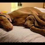Wilson, o street terrier